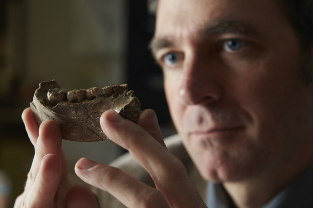 UNLV Associate Professor of Anthropology Brian Villmoare was part of a group that found this fossilized jawbone from a human-ape creature that lived 2.8 million years ago. (Aaron Mayes/UNLV Photo  ...