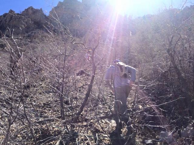 Las Vegas Review-Journal sports columnist Ron Kantowski is shown trudging through brambles on his way to view the site of a plane crash that killed actress Carole Lombard and 21 others on Mount Po ...