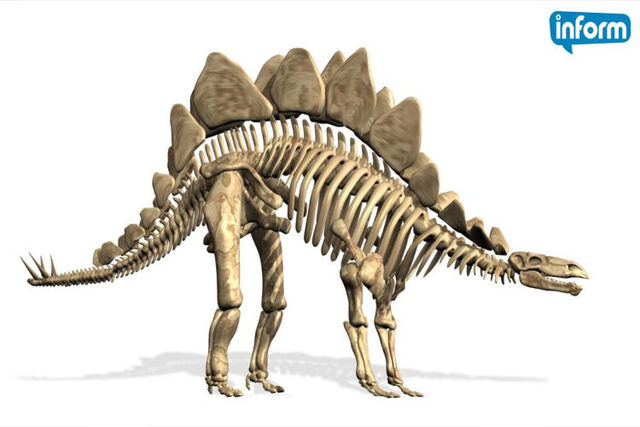 Stegosaurus. Courtesy (Inform/NDN)