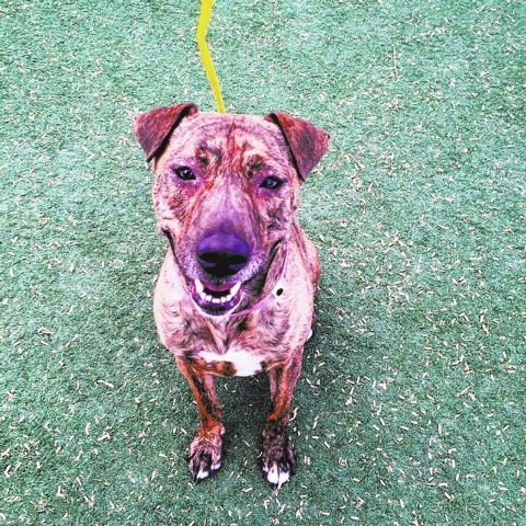 Mamas, The Animal Foundation My name is Mamas (ID No. A824431), and I'm a 4-year-old, spayed, female Chinese shar-pei mix looking for my forever home. My joyful spirit is sure to put a smile on  ...