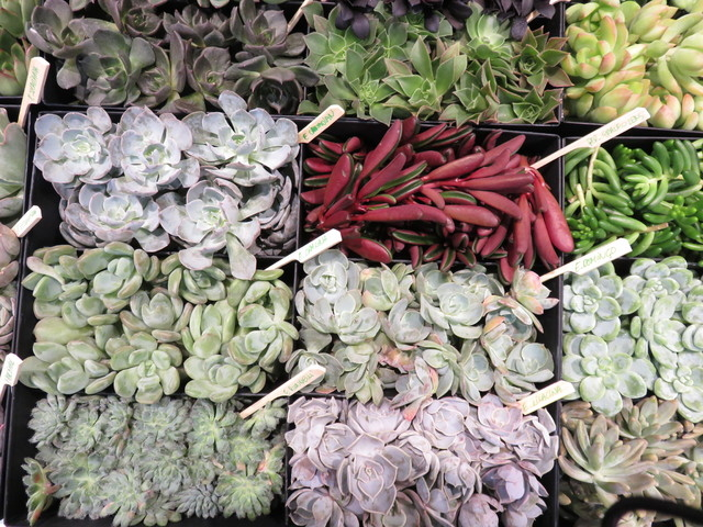 """Courtesy Kathy Fediw Desert-friendly succulents are popular because they're easy to maintain and difficult to kill. They also have a cleaner, more """"structural"""" look than other houseplants."""
