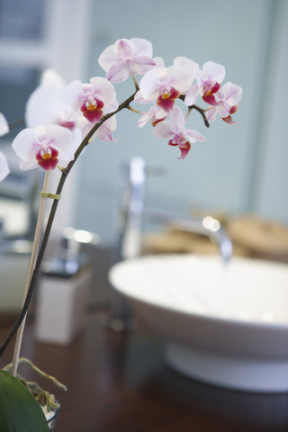 Thinkstock Orchids are a trendy design choice due to their exotic appeal.
