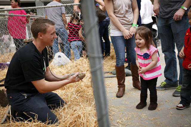 Leah Fleming, 2, looks at a bearded dragon held by Zach Wirth on Feb. 15 at Zappos.com's downtown campus, 400 E. Stewart Ave., where animals from Roos-N-More Wild Animal Adventures were on displ ...
