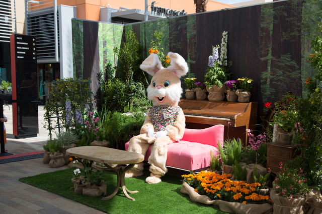 The Easter Bunny is scheduled to be at Downtown Summerlin, 1850 Festival Park Drive, from 10 a.m. to 8 p.m. April 2-4. Children's activities are planned, including a springtime arts and crafts f ...