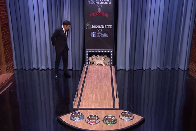 Puppies pick the NCAA tournament winner (Screengrab/The Tonight Show Starring Jimmy Fallon/YouTube)