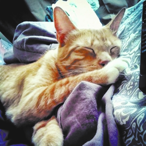 Cheddar, Foreclosed Upon Pets Inc. Cheddar is so precious, so loving and so adorable. He is a beautiful 2-year-old domestic short hair orange and white tabby with mitten feet. He loves to cuddle a ...