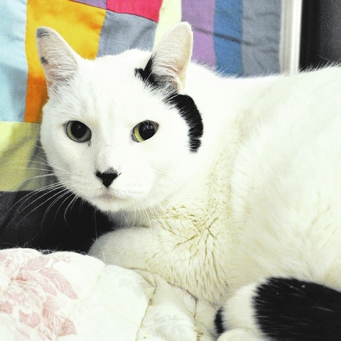 Snowball, Happy Home Snowball is a handsome, 6-year-old white-and-black fellow. He is very sociable, likes hanging out in high places and playing with toys. He is neutered and current on his shots ...