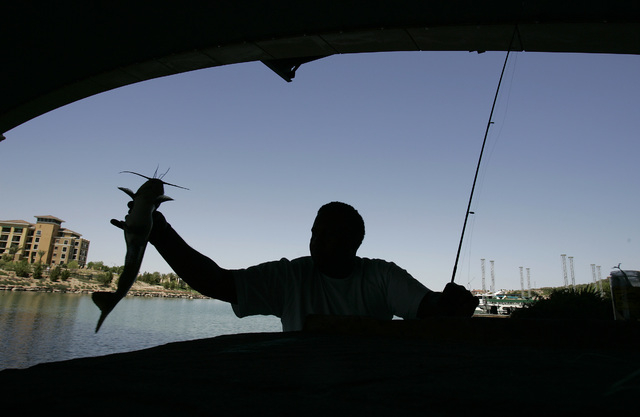 Dennis McCray holds up a catfish he caught in Lake Las Vegas while fishing under Montelago Village Resort bridge in 2007. McCray released the fish a short time later. (Review-Journal file photo)