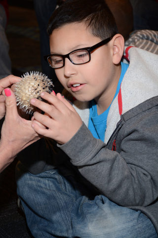 Sergio Ortega learns about porcupine puffer fish at Siegfried & Roy's Secret Garden Dolphin Habitat as part of a field trip during Nevada Blind Children's Foundation's Spring Break Day Camp  ...