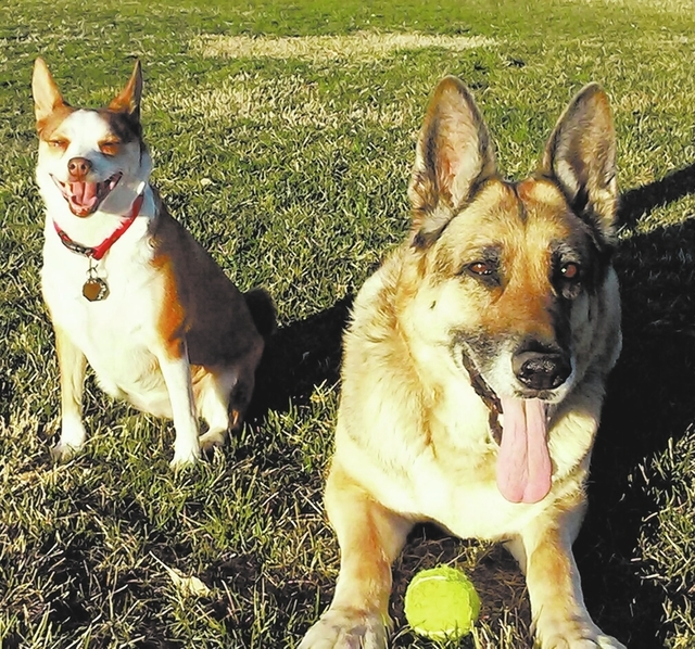 """Danny Hart of Las Vegas said, """"This is Maggie, a 10-year-old German shepherd, with her best friend Rat, who is 5. These dogs love traveling. Maggie raised Rat."""""""