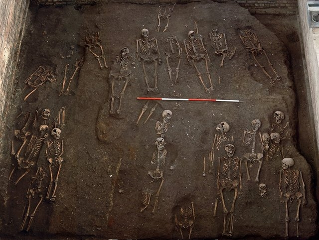 "Some 400 complete skeletons in ""excellent condition"" were found at the site. (Craig Cessford/University of Cambridge)"