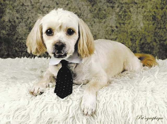 Banjo, Southern Nevada Beagle Rescue Banjo is a 3-year-old Lhasa apso who ended up at a local kill shelter because he is a little dominant. He is a sweet boy who would be better as an only dog. He ...