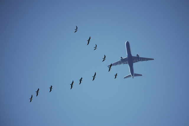 flying birds and plane in blue sky