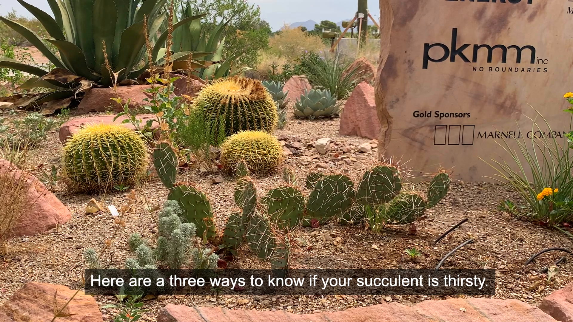 Three clues indicate when succulents need watering | Las Vegas