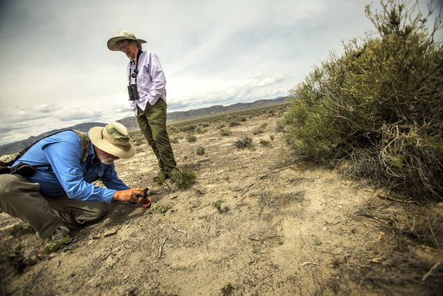 Naturalist and outdoorsman Jim Boone and his wife, Liz, view vegetation in Coal Valley, a three-hour drive north of Las Vegas, on Wednesday, May 20, 2015. Over 800,000 acres in central Nevada is p ...
