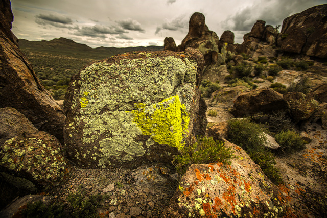 Lichen is seen Wednesday, May 20, 2015, growing  on a rock formation in Garden Valley, which is a three-hour drive north of Las Vegas. Over 800,000 acres in central Nevada is proposed as the Basin ...