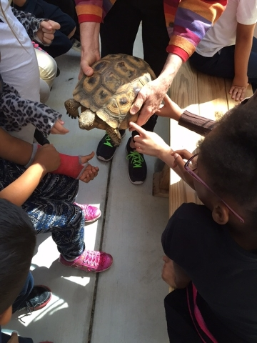 Students at Thiriot Elementary School celebrated World Turtle Day May 19, 2015, by learning about tortoises thanks to nonprofit The Tortoise Group. Here they are shown interacting with Larry Bird, ...