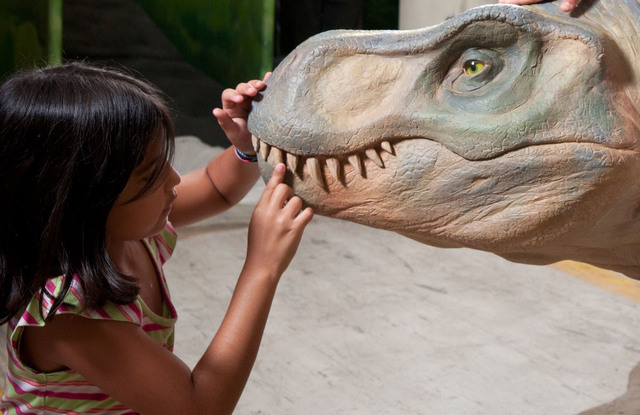 "A visitor checks out Tyrannosaurus rex's dental details at ""Dinosaurs: Land of Fire and Ice,"" which opens Saturday at the Discovery Children's Museum. (Courtesy.)"