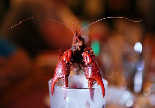 A large crawfish was spared from being eaten, declared a table mascot and placed upon a beer glass to be displayed as a trophy at Lola's Summerlin location May 1, 2015. (Ronda Churchill/View)