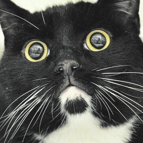 Romeo, Happy Home: Romeo is a gorgeous black and white tuxedo. He is 4 years old and as friendly and playful as can be. He lost his home when his elderly owner could no longer care for him. He's ...