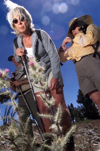 Joy Cuniff stops to look at a flowering thistle on Aug. 4, 2001, on the side of the trail during the Silent Heroes of the Cold War National Memorial Expedition to the site of the 1955 Air Force C- ...