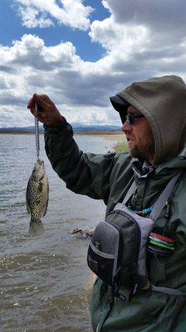 Mark Beckstrand, a fisheries biologist in Lincoln County, weighs and measures a crappie while gathering data on the fishery in Echo Canyon Reservoir. The crappie bite at this remote water is on fi ...