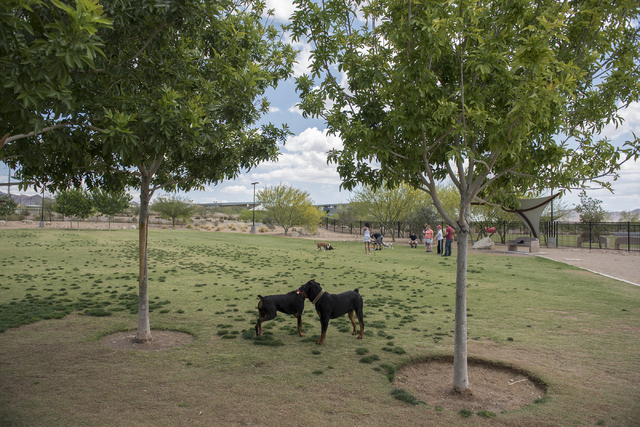 Dogs play at Heritage Bark Park at 300 Racetrack Road in Henderson on Tuesday, May 19, 2015. (Martin S. Fuentes/Las Vegas Review-Journal)