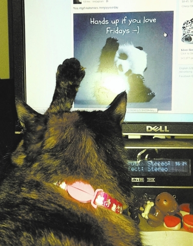 """June Yato of Las Vegas shared this photo, saying, """"CoCo keeps me company while I'm online. As I was scrolling through my Facebook page, I came across this cute post. CoCo placed her paw next t ..."""