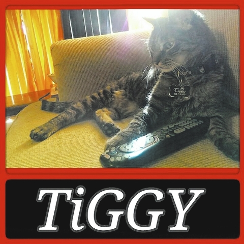 """Manny Bravo of Las Vegas said, """"This is TiGGY. He thinks he's human. He enjoys eating table food and sits on the couch to watch TV. Sometimes he will guard the remote so we won't change the  ..."""