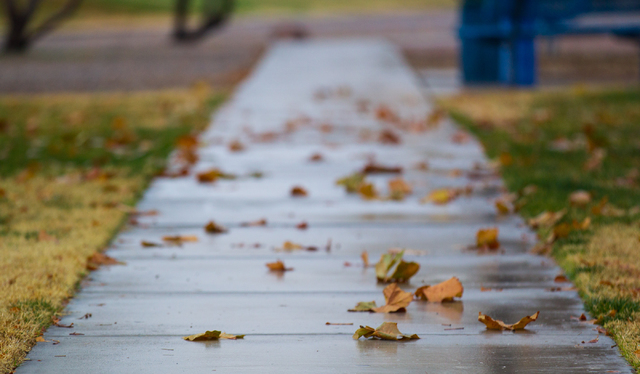 Leaves are seen on the ground following an early morning rain at Desert Breeze Park in Las Vegas on Tuesday, Jan. 27, 2015. (Chase Stevens/Las Vegas Review-Journal)