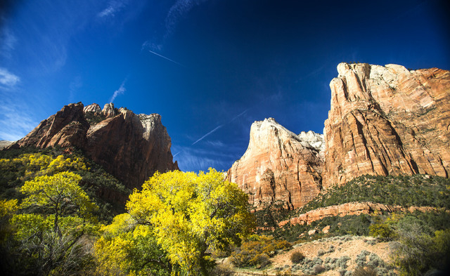 Cottonwood trees changing colors at the Court of the Patriarchs in Zion National Park on Sunday, Nov.9, 2014. Early November is the best time to enjoy the fall foliage in the park. (Jeff Scheid/La ...
