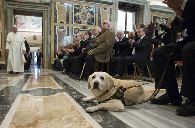 A guide dog is seen as Pope Francis arrives to attend a special audience with Italian Blind Union at the Vatican, Dec. 13, 2014. (Reuter/Osservatore Romano)