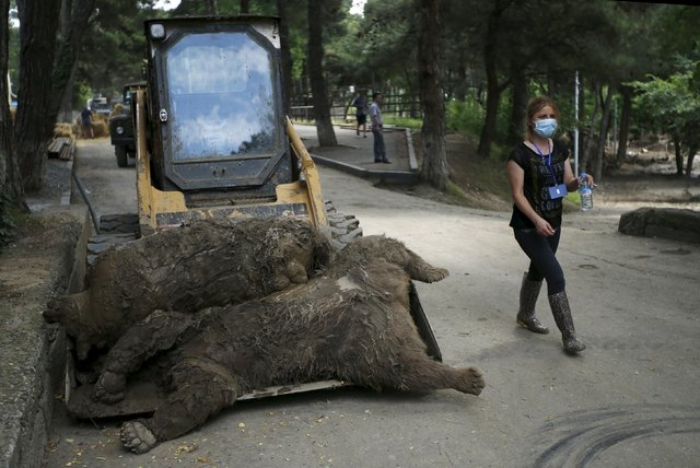 A zoo keeper walks past dead bears at the zoo in Tbilisi, Georgia, June 17, 2015. Tigers, lions, bears and wolves were among more than 30 animals that escaped from a Georgian zoo and onto the stre ...