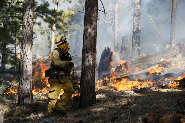 A firefighter monitors a wildfire as it spreads to the road near Jenks Lake in the San Bernardino National Forest, California, United States, June 18, 2015. Wildfires raging in three West Coast st ...