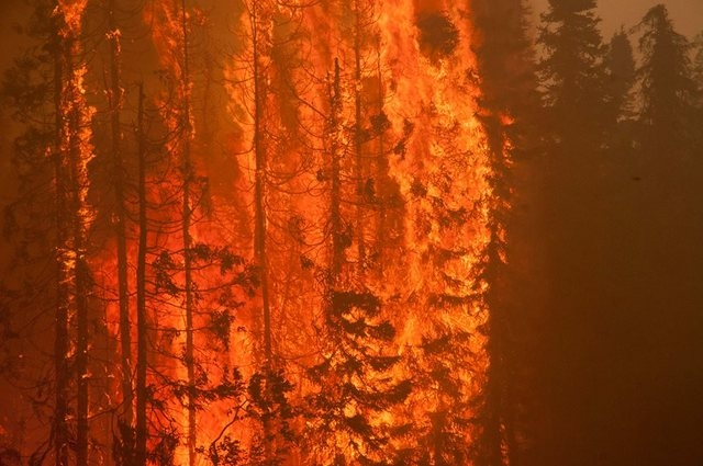 Trees are consumed by flames as an out of control wildfire burns near Willow, Alaska, in this picture courtesy of Mat-Su Borough taken June 14, 2015. (REUTERS/Mat-Su Borough/Stefan Hinman/Handout)
