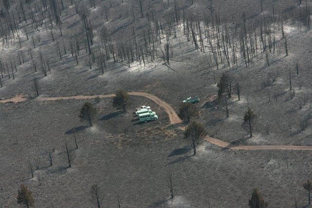 Fire personnel trucks are shown along a road in a burned out area of the Washington Fire near Markleeville, California in this handout photo released to Reuters June 24, 2015. A wind-whipped wildf ...