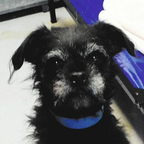 Shadow, The Animal Foundation: My name is Shadow (ID No. A843327), and I'm an 8-year-old male terrier. I have a kind, calm soul and an independent spirit. I'm ready for my next big adventure.  ...