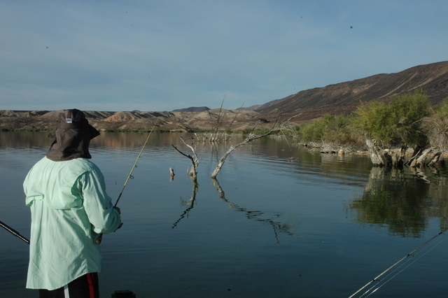 Nevada waterways don t make list of america s top spots for Lake mohave fishing