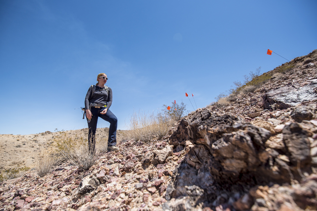 Kish LaPierre, an archaeologist, searches for artifacts on Nellis Air Force Base in Las Vegas on Wednesday, June 24, 2015. (Joshua Dahl/Las Vegas Review-Journal)