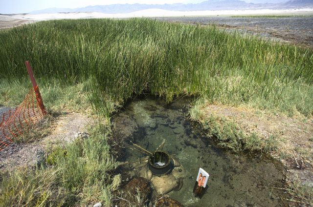 A spring-fed marsh is seen near  Tecopa, Calif., about 90 miles west of Las Vegas, is seen Thursday, June 25, 2015. (Jeff Scheid/Las Vegas Review-Journal) Follow Jeff Scheid on Twitter @jlscheid
