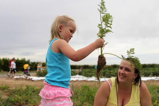 Emalee Andrews, 4, inspects a carrot she picked as her mother Shelly looks on at Gilcrease Orchard in Las Vegas Tuesday, June 9, 2015.  (Erik Verduzco/Las Vegas Review-Journal) Follow Erik Verduzc ...
