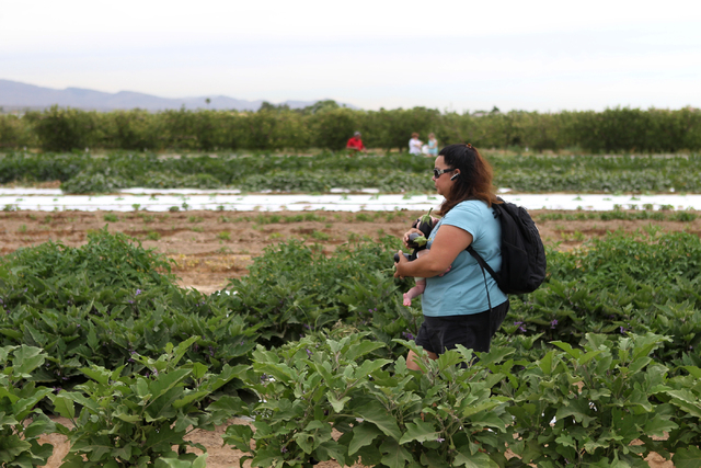 Christine Lewis walks while carrying her 6-week-old daughter Kaelani and a  handful of eggplant she picked at Gilcrease Orchard in Las Vegas Tuesday, June 9, 2015.  (Erik Verduzco/Las Vegas Review ...
