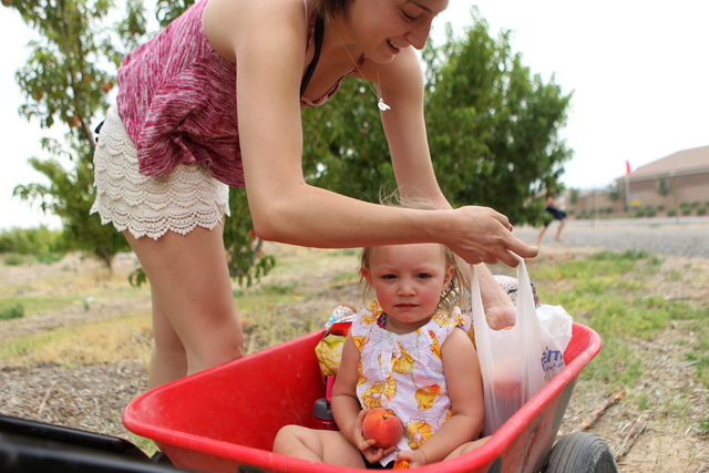 Bianca Ordaz, left, fills her bags with peaches as her niece Brooklyn, 2, look on at Gilcrease Orchard in Las Vegas Tuesday, June 9, 2015.  (Erik Verduzco/Las Vegas Review-Journal) Follow Erik Ver ...