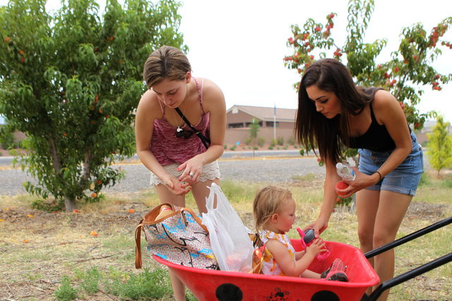 Bianca Ordaz, from left, her niece Brooklyn, 2, and sister Nicole, take a break after picking peaches at Gilcrease Orchard in Las Vegas Tuesday, June 9, 2015.  (Erik Verduzco/Las Vegas Review-Jour ...