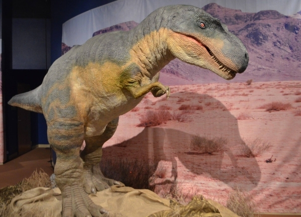 """A half size animatronic Tyrannosaurus Rex is the largest attraction in the Springs Preserve's """"Dino Summer"""" exhibit. (Ginger Meurer/Special to View)"""