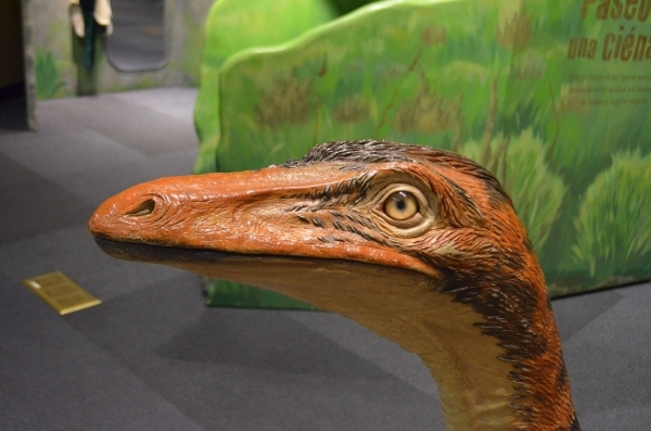 """A troodon protects its eggs at the """"Dinosaurs: Land of Fire and Ice"""" exhibit at the Discovery Children's Museum. (Ginger Meurer/Special to View)"""