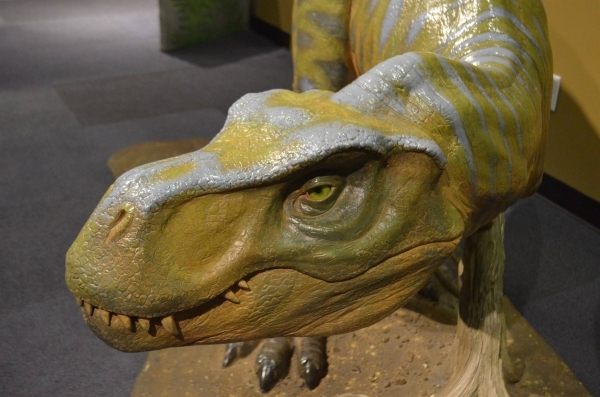 """A juvenile Tyrannosaurus Rex greets visitors to the """"Dinosaurs: Land of Fire and Ice"""" exhibit at the Discovery Children's Museum. (Ginger Meurer/Special to View)"""