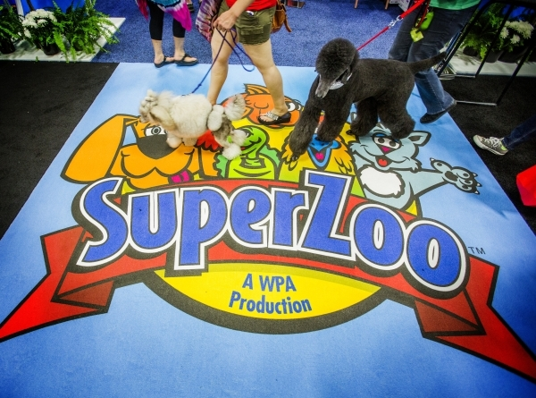 Lulu, left, and Ava, both standard poodles walk during the Super Zoo convention at the Mandalay Bay Convention Center,  3950 South Las Vegas Boulevard, on Tuesday, July 21, 2015. JEFF SCHEID/LAS V ...