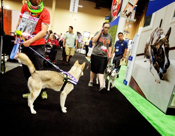 Apollo the dog, left, looks at two husky's during the Super Zoo convention at the Mandalay Bay Convention Center,  3950 South Las Vegas Boulevard, on Tuesday, July 21, 2015. JEFF SCHEID/LAS  ...