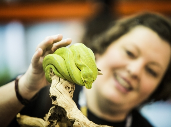 Barbara Brown pets a green tree python during the Super Zoo convention at the Mandalay Bay Convention Center,  3950 South Las Vegas Boulevard, on Tuesday, July 21, 2015. The 2   year old snake ret ...